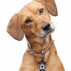 Dispensador de fundas para perros